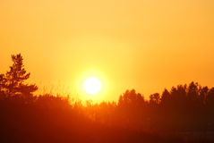 Early orange clear sunrise. In the forest in summer royalty free stock photos