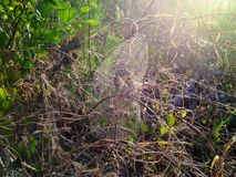 Early rising spider! Royalty Free Stock Photos