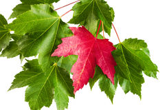 Early Sign of Autumn Stock Images
