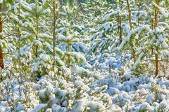 Early snow in autumn forest Royalty Free Stock Images