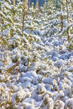 Early snow in autumn forest Stock Image