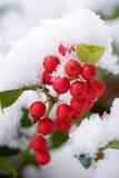 Early Snow Fall Royalty Free Stock Photos