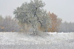 Early snow on yellow leaves Royalty Free Stock Photos