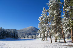 Early Snowfall In The Black Hills Of South Dakota Royalty Free Stock Photography