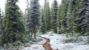 Early Snowfall Jasper National Park stock footage