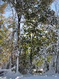 Early snowstorm covers remaining leaves on the trees. Leaves were still on the hardwood trees, when an early snowstorm covered everything in white, while Stock Image