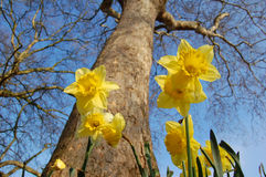 Early spring Royalty Free Stock Photos