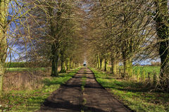 Early spring avenue of Lime Trees leading to farm Royalty Free Stock Photos