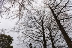 The bare trees. Early spring, bare trees, yet leaves. In this way, there is no mood for it Royalty Free Stock Photography