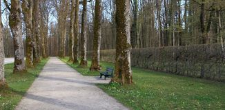 Early spring: beautiful alley in a park Royalty Free Stock Image