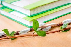 Early spring, blossoming branches against background of books, stock photos