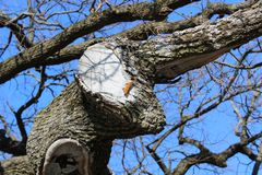 early spring blue sky oak butterfly stock images