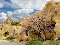 Early spring in Cappadocia. Central Turkey. Royalty Free Stock Images