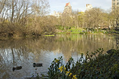 Early Spring, Central Park Stock Photos