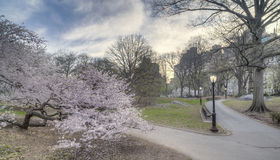Early spring in Central Park, New York City Stock Image