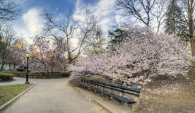 Early spring in Central Park, New York City Royalty Free Stock Image