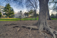 Early spring in Central Park, New York City Royalty Free Stock Photo