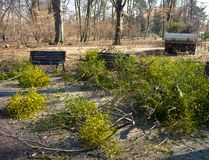 Early spring cleanings in park. Early spring cleanings in the park Royalty Free Stock Images