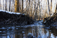 Early spring creek. In sunset Stock Photography