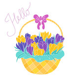 Early spring crocus flowers in a basket Royalty Free Stock Images