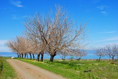 Early spring on the Datсa peninsula in Turkey. Royalty Free Stock Photos