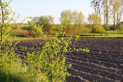 Early spring field sown by a farmer. cultivated field. Early spring field sown by a farmer agriculture Royalty Free Stock Photo