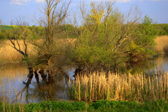 Early spring fields lake and trees Royalty Free Stock Photography