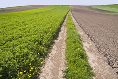 Early spring fields Stock Photo