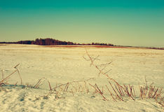 Early spring. On fields snow starts thawing Stock Photos