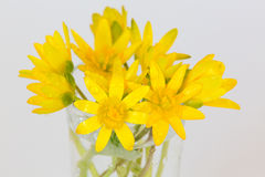 Early spring flowers Ranunculus ficaria bouquet Royalty Free Stock Photo