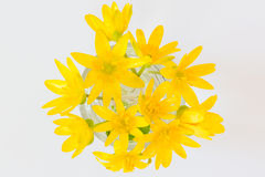 Early spring flowers Ranunculus ficaria bouquet Royalty Free Stock Photography