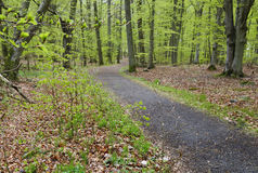 Early spring in forest. Forest footpatch in early spring season Royalty Free Stock Images