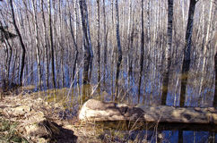 Early spring forest landscape with water Royalty Free Stock Photo