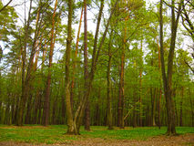Early spring forest with little blossoms growing up in the trees Stock Photo