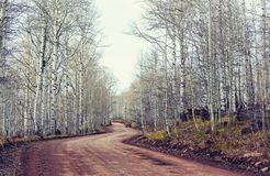 Early spring forest stock images
