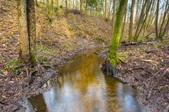 Early spring forest with small stream landscape Royalty Free Stock Image