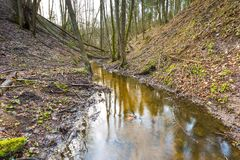 Early spring forest with small stream landscape Stock Image