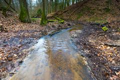 Early spring forest with small stream landscape Royalty Free Stock Images