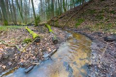 Early spring forest with small stream landscape Stock Photo