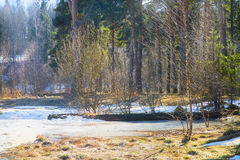 Early spring forest Royalty Free Stock Photography