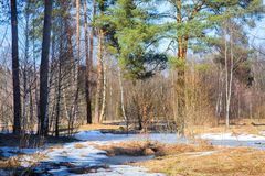 Early spring forest Stock Photography