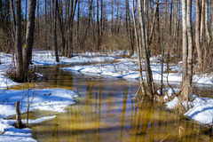Early spring in forest, sunny march landscape. Early spring: river stream in forest. March belorussian landscape Stock Image