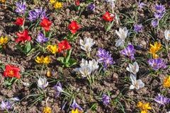 Early spring garden Stock Photos