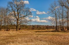 Early spring. Grazing on Pacbase emaciated during winter horses. Early spring. Grazing on pasture in the winter of emaciated horses. The grass has not grown Stock Photo