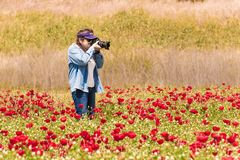 Elderly woman taking pictures of field with flowers Royalty Free Stock Images