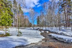 Early spring landscape in forest with melting snow and brook. Early spring landscape in the forest where white birches, green pine trees and first young grass royalty free stock image