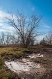 Early spring landscape. Leafless tree and frozen puddle.  stock photos