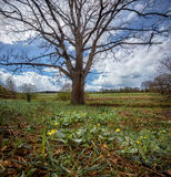 Early spring landscape Stock Image