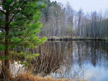 Early spring landscape with pine tree and pond Stock Image
