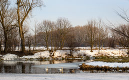 Early spring landscape with swans family Royalty Free Stock Photos
